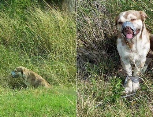 Dos fontaneros salvan a un perro abandonado atado y con el morro tapado