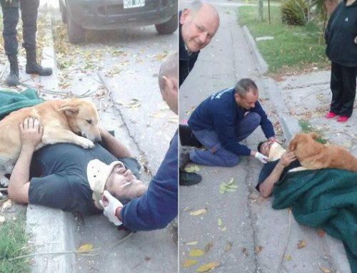 El perro que abrazó a su dueño herido hasta que llegó la ambulancia
