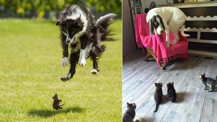 Divertidas fotos de perros asustados por cosas cotidianas