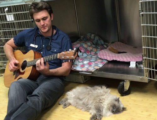 El veterinario que canta a sus pacientes antes de las operaciones