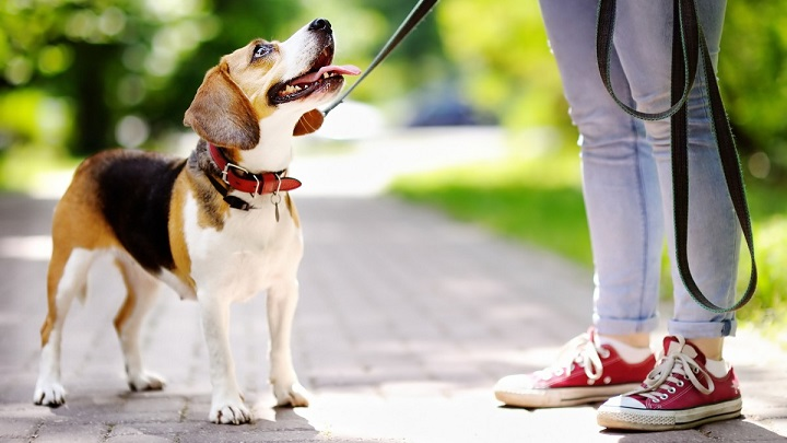 Cómo saber si hay que llevar al perro al psicólogo