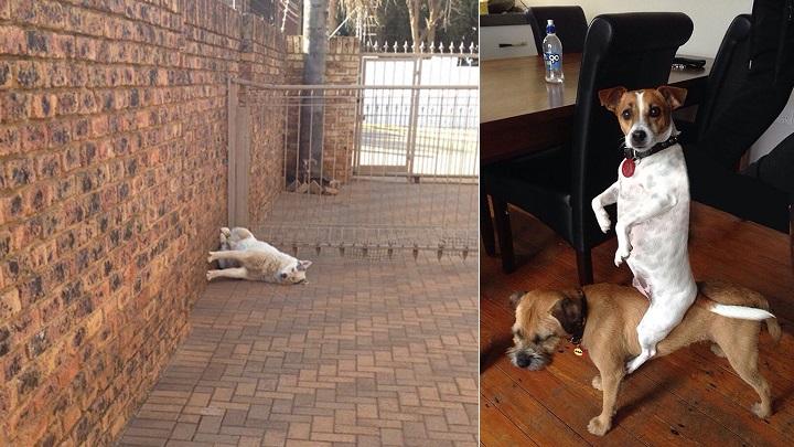 Fotos de perros haciendo cosas raras