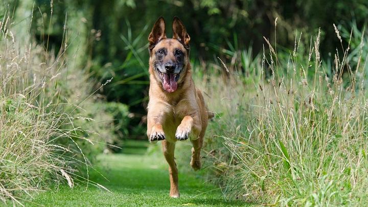 Por qué adiestrar a un perro en positivo