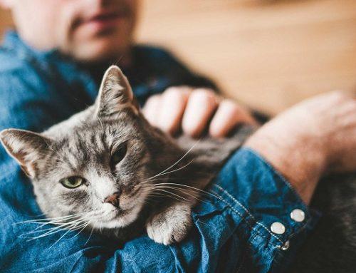 Consejos para cuidar a un gato con alzhéimer