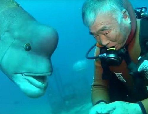 La entrañable amistad entre un pez y un abuelo japonés