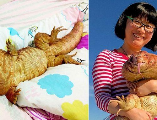 MacGyver, el lagarto gigante que se comporta como un perro