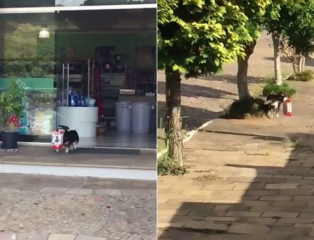El perro que va solo a comprar su comida
