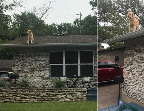 El perro subido en el tejado que se ha hecho viral