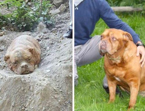 5 Historias de perritos rescatados que te arrugarán el corazón