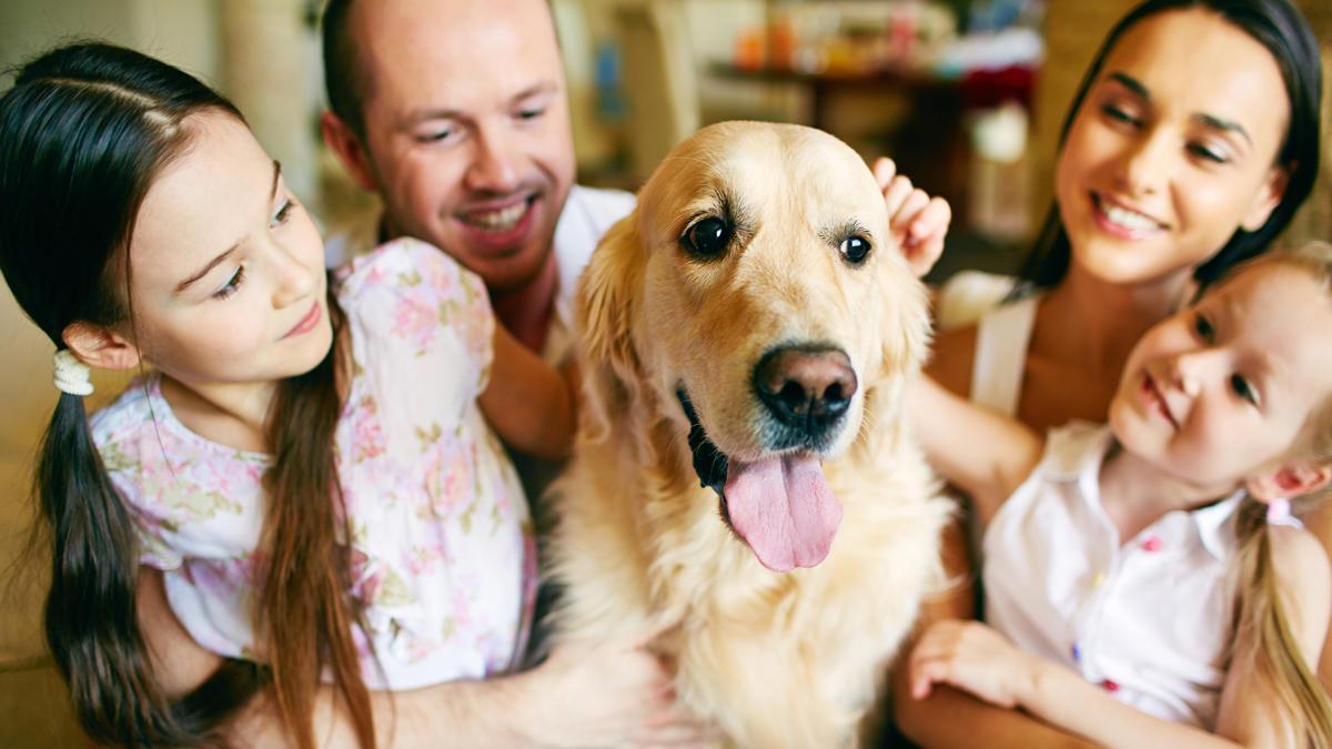 Historias de perritos rescatados que te alegrarán el día