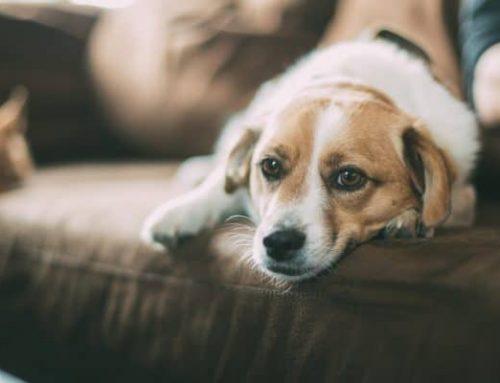 Conoce la triste historia del perrito Oddy