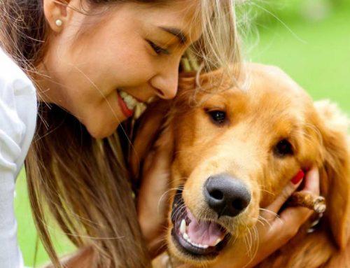 ¡5 mascotas que salvaron la vida de sus dueños!