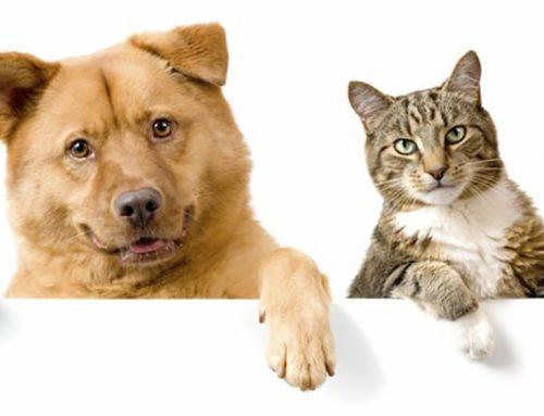 ¡ALERTA! Tu mascota puede sufrir Alzheimer