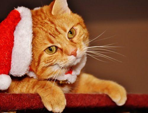 ¿La navidad puede ser peligrosa para tu gato? ¡Descúbrelo!