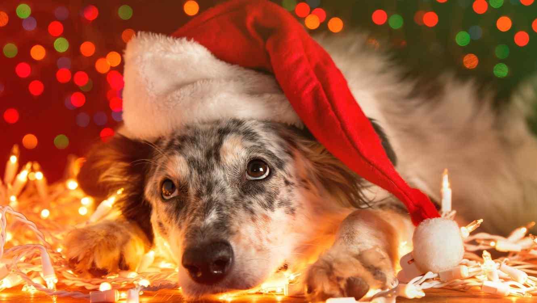¡Cuida a tu perro de los fuegos artificiales en navidad con estos consejos!