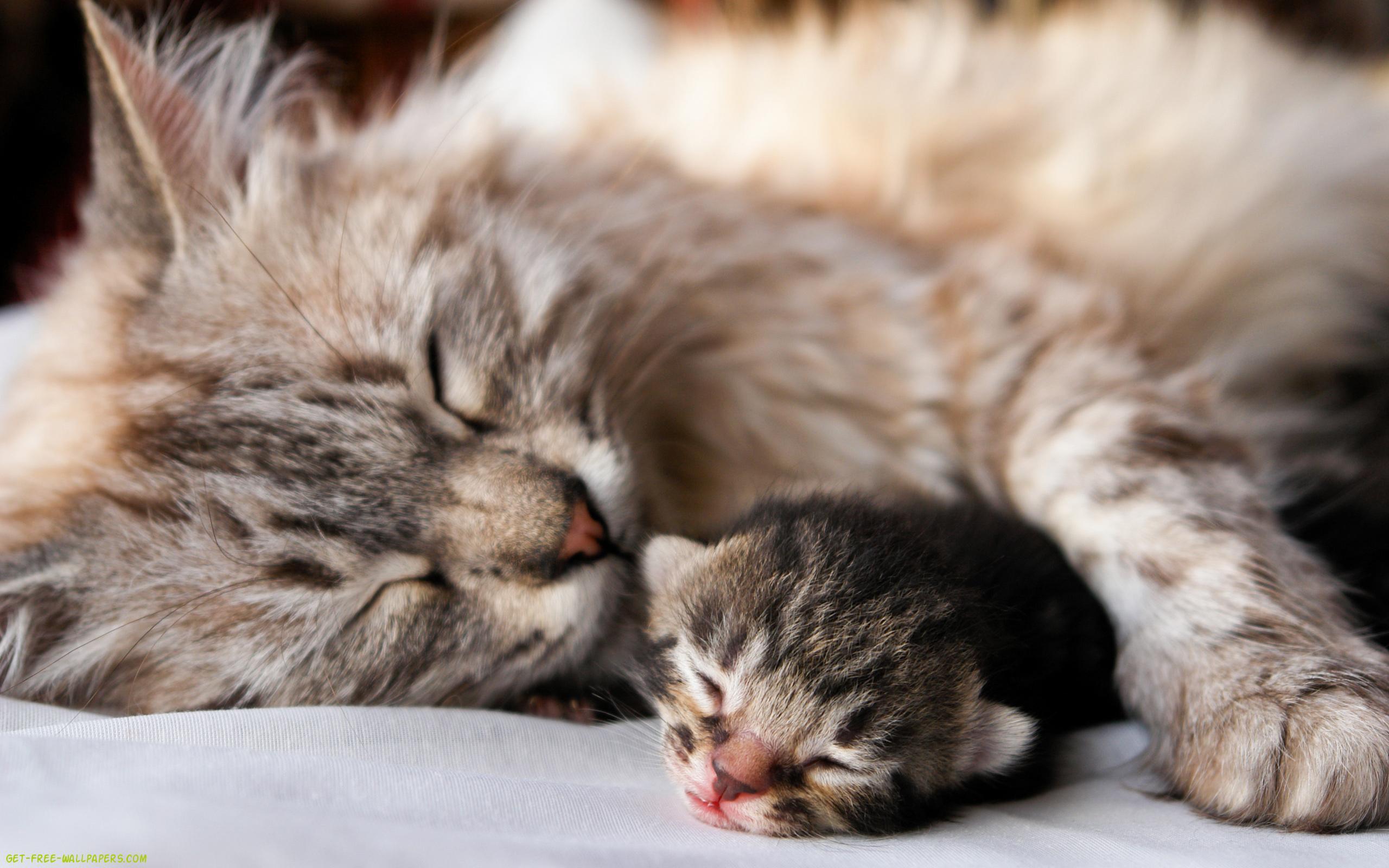 Conoce las complicaciones que puede tener tu gata durante el parto
