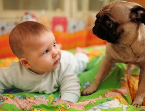 Prepara a tu mascota para la llegada de un bebé a casa