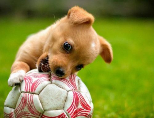Estos juguetes te ayudarán a mantener a tus perros activos