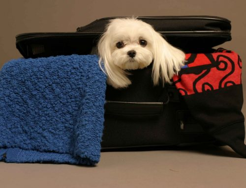 Tips que necesitas saber si vas a viajar con tu mascota