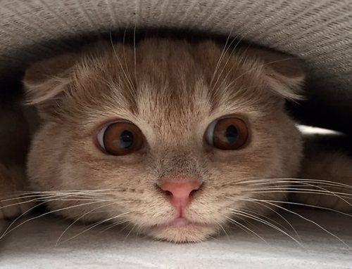 Conoce los miedos más comunes que pueden tener los gatos