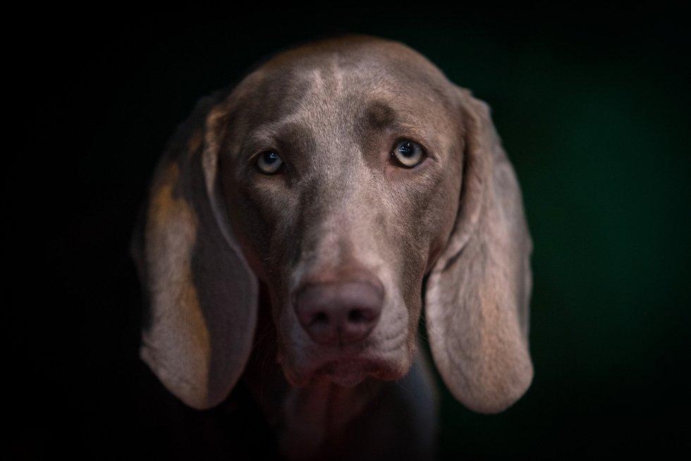 ¿Sabías que los perros pueden sufrir de epilepsia? ¡Conoce las señales!