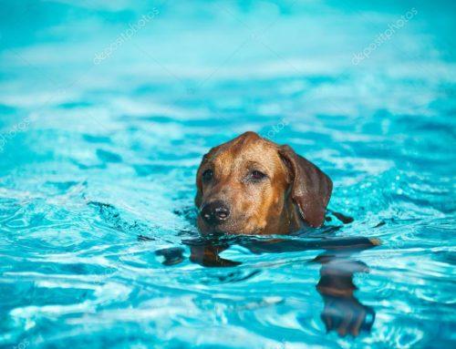 ¡Al agua! Enseña a tu perro a nadar con estos consejos