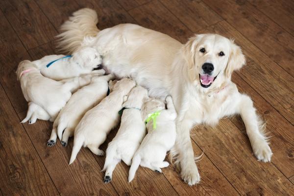 ¿Cómo debe ser la lactancia de un cachorro? Descúbrelo aquí