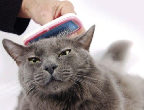 Mira cómo puedes deshacerte del pelo de gato rápidamente