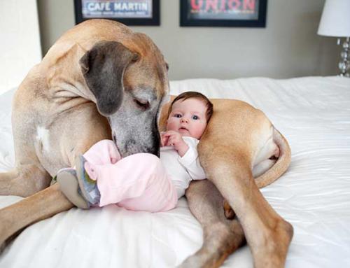 Perros y gatos ayudan al crecimiento de un bebé más sano