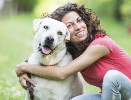 Cinco trucos súper efectivos para que tu perro venga cuando lo llames