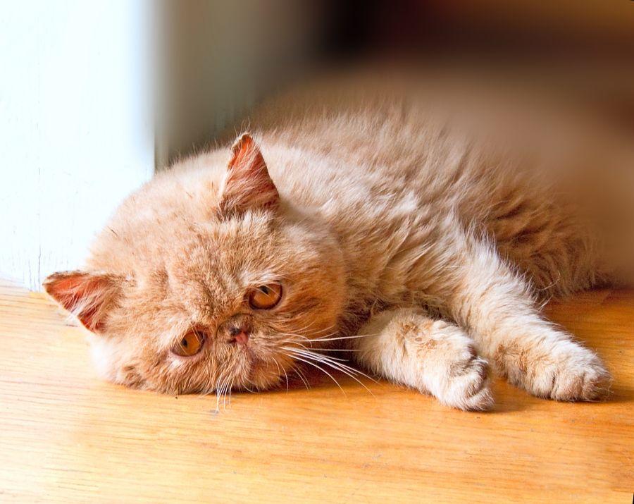 Trucos para que tu gato permanezca fresco durante el día