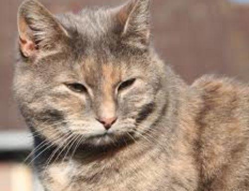 Consejos para cuidar a un gato anciano en casa