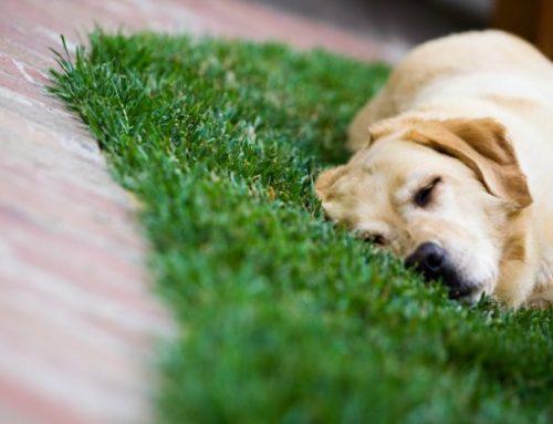 ¿Qué hacer en caso de presenciar el atropello de un perro?