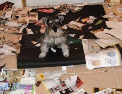 ¿Qué hacer cuando mi perro destroza toda la casa?