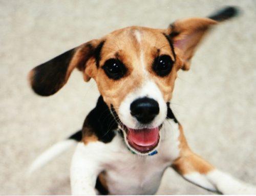 Mentiras caninas: conoce cuales son las más comunes