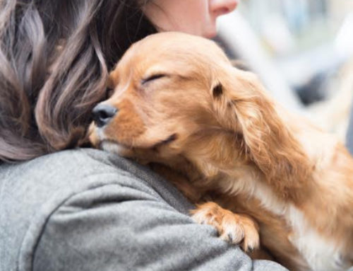 Descubre como tener un perro en casa ayuda a mejorar tu salud