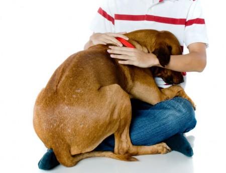 ¿Cómo evitar el miedo de tu perro en el veterinario?