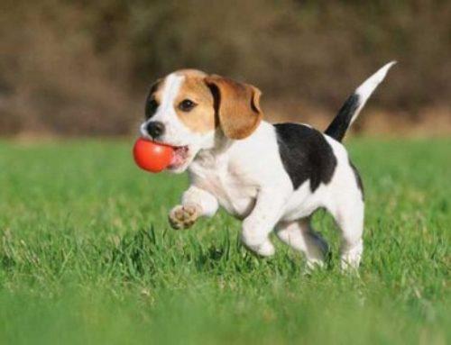 Crea los mejores juguetes para tu mascota con materiables reciclabes