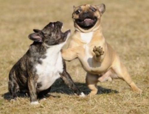 ¿Cómo tener muchos perros en casa sin enloquecer en el intento?