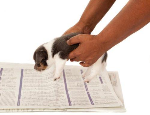 Consejos que debes seguir para que tu perro deje de orinar en casa