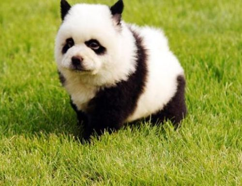 Anímate a conocer las 10 razas de perros más raras en el mundo