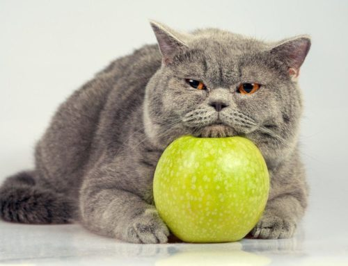 ¿Sabías que existen frutas altamente tóxica para los gatos? ¡Conócelas!