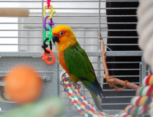 Jaulas para Pájaros – ¿Cómo es la jaula ideal – perfecta?