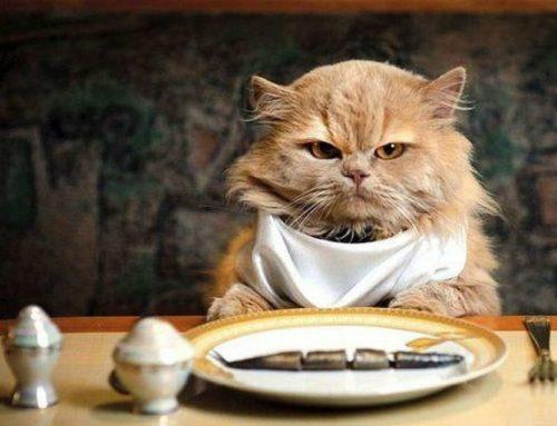 Alimentos prohibidos para  los Gatos y Gatitos