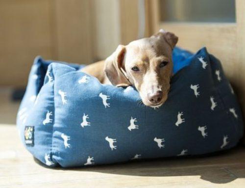 Camas para Perros – ¿Sabes qué cama necesita tu perro?
