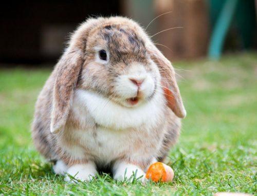 Jaulas para Conejos – ¿Cómo es la jaula ideal – perfecta?