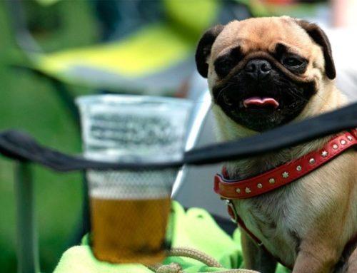 Cerveza para Perros – ¿Es buena para los Perros?