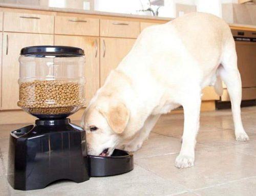 Comederos para perros ¿realmente funcionan?