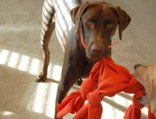 Los mejores juguetes con premio para perros y gatos