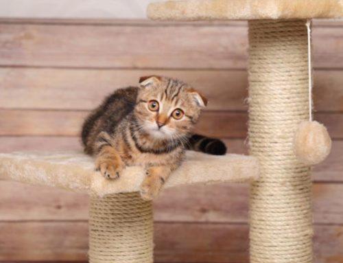 Rascadores para gatos ¿Cómo hacer uno en casa?